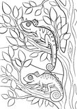 Coloring pages. Wild animals. Two little cute chameleons. Stock Photography