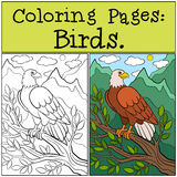 Coloring Pages: Wild Birds. Cute bold eagle sits and smiles. Royalty Free Stock Photography