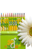 Coloring pencils and flower. Row of coloring pencils in decorative box with blooming flower in foreground Royalty Free Stock Images