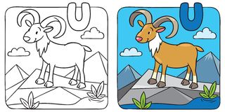 Coloring picture of funny urial. Alphabet U Royalty Free Stock Photo