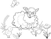 Coloring with sheep Royalty Free Stock Images