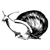 Coloring snail black and white vector illustration. Black and white vector Coloring illustration of a snail Royalty Free Stock Photos