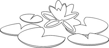 Coloring with water lily Royalty Free Stock Image