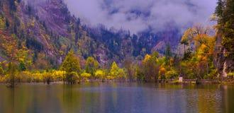 colorized树丛和湖 免版税图库摄影