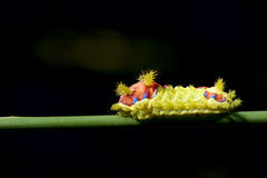 Colorized caterpillar Royalty Free Stock Photo