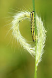 Colorized caterpillar Royalty Free Stock Photography
