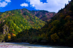 The colorized grove in blue sky. The colorized grove and river was in blue sky which is in Miyaluo area of Sichuan province, the southwestern China. It's the stock photography