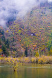 The colorized grove and lakes. In raining which is in Bipenggou area of Sichuan province, the southwestern China. It's the famous colorized forest viewing area royalty free stock photography