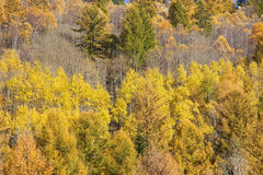 Colorized mountain forest Royalty Free Stock Image