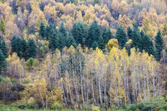 Colorized mountain forest Royalty Free Stock Photo