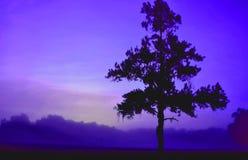 Colorized Purple Haze Tree Stock Image