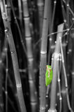 Colorized Tree Frog Stock Photography