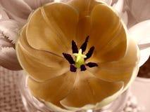 colorized tulipany cyfrowo Zdjęcie Stock