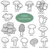 Colorless set of edible mushrooms. Black and white set of edible mushrooms, coloring page with different fungi Royalty Free Stock Photos
