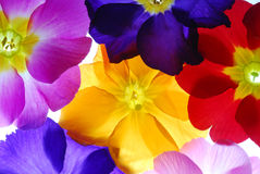Colors Stock Photos