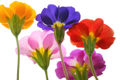 Colors. Flowers with different colors against light box Stock Image