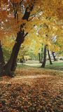 Colors of automn. Falling leaves in an automn park Royalty Free Stock Images