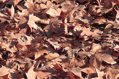 The colors of autum Stock Photos