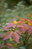 The colors of the autumn. Red leaves and yellow flower Stock Photo