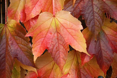 Colors of Autumn Stock Photography