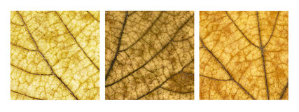 Colors of the autumn. Three fallen leaves in close-up Royalty Free Stock Images