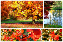 The colors of autumn. Trees and leaves in autumn,collage Stock Photo