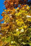 Colors of autumn Royalty Free Stock Images