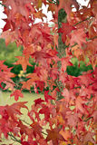 The colors of autumn Stock Image