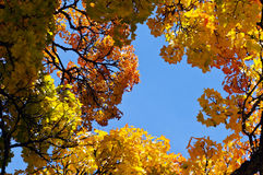 Colors of autumn Stock Images