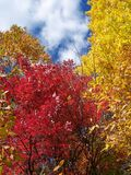 Colors of Autumn. Leaf Change in the Fall Royalty Free Stock Photo