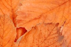Colors of autumn. Leafs background stock photo