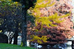 Colors of autumn. Colorful trees in Autumn in Vigo, spain Royalty Free Stock Photo