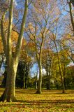 Colors of autumn. Colorful trees in Autumn in Vigo, spain Stock Photography