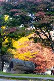 Colors of autumn. Colorful trees in Autumn in Vigo, spain Stock Images