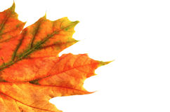 Colors of autumn #8 royalty free stock image