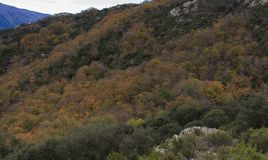 The colors of Autumn appear on the mountain, corollarizing it.  Stock Images