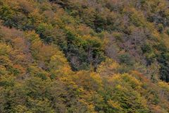 The colors of Autumn appear on the mountain, corollarizing it.  Royalty Free Stock Photos