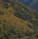 The colors of Autumn appear on the mountain, corollarizing it.  Royalty Free Stock Images
