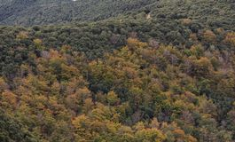 The colors of Autumn appear on the mountain, corollarizing it.  Royalty Free Stock Photo