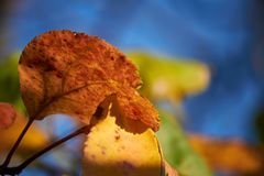 Colors of the autumn royalty free stock photos