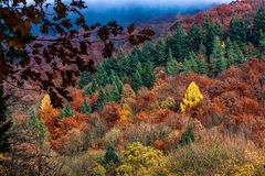 Colors of autumn. Beautiful forest in the fall in Heidelberg, Germany Stock Image
