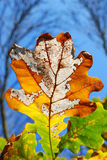 Colors of autumn Royalty Free Stock Photography
