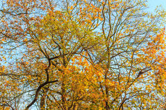 Colors of autumn. Branches of trees with colorful leaves. Seasons, Autumn Stock Image