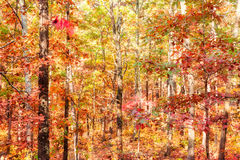Colors of autumn or fall in forest Stock Photo