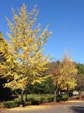 Colors of Autumn. Fall leaves yellow fine Stock Photo