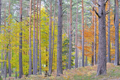 Colors of autumn forest Stock Photography