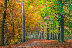 Colors of an autumn forest Royalty Free Stock Image