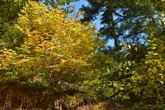 The colors of autumn in forest. The colors of autumn. Autumn in the mixed forest in beautiful colors Stock Photos