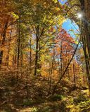 Colors of autumn in the forest. stock images