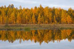 The colors of autumn in the forests of Finland Stock Photos